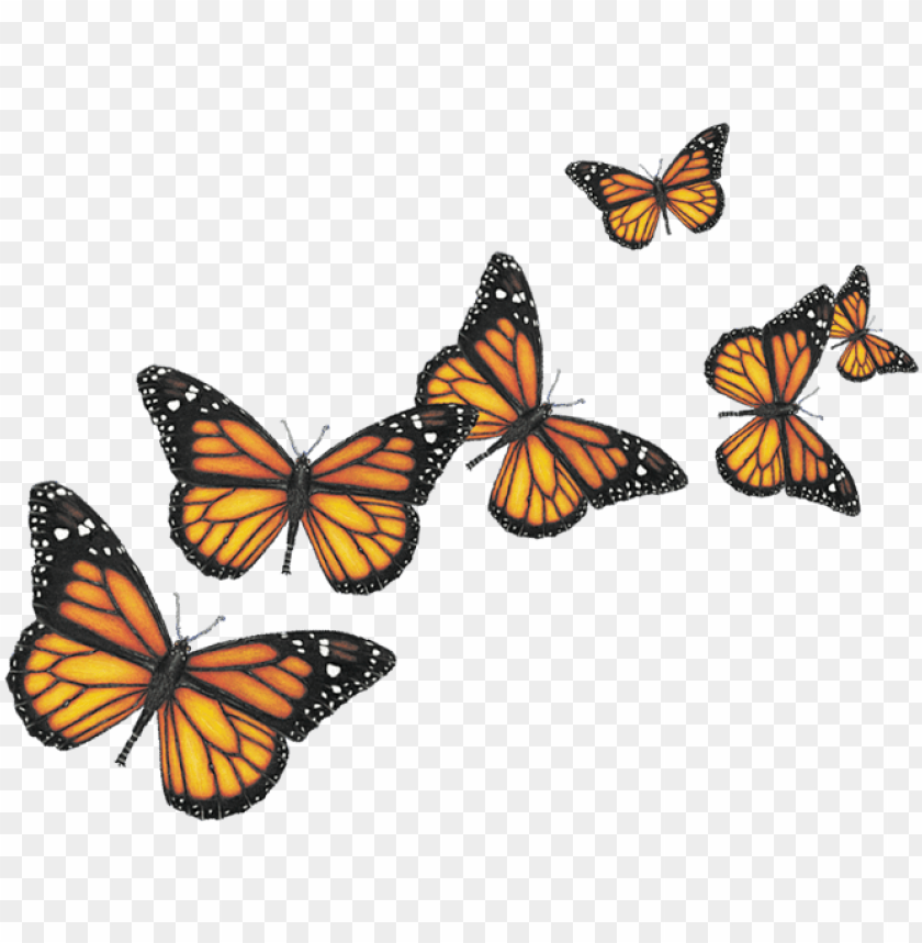 free PNG insects - butterfly PNG image with transparent background PNG images transparent