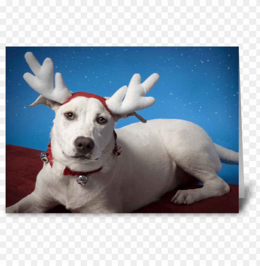 free PNG irritated dog with reindeer ears greeting card - reindeer PNG image with transparent background PNG images transparent