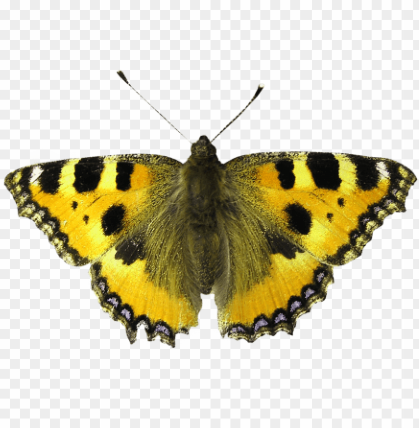 free PNG isolated isolated,isolated image,bug,background removing, - smoking is dangerous! transform your life now! PNG image with transparent background PNG images transparent