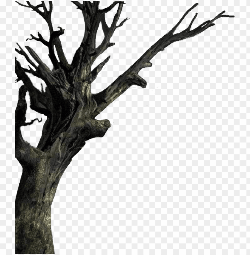 free PNG isolated the tree - haunted trees transparent background PNG image with transparent background PNG images transparent