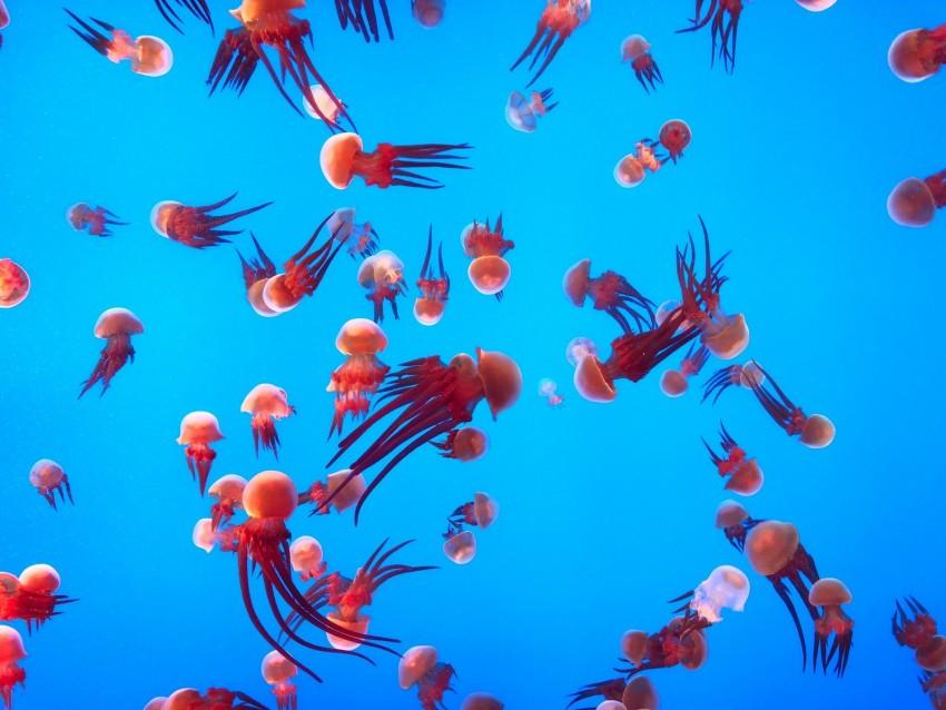 free PNG jellyfish, underwater world, ocean, aquarium, swimming background PNG images transparent