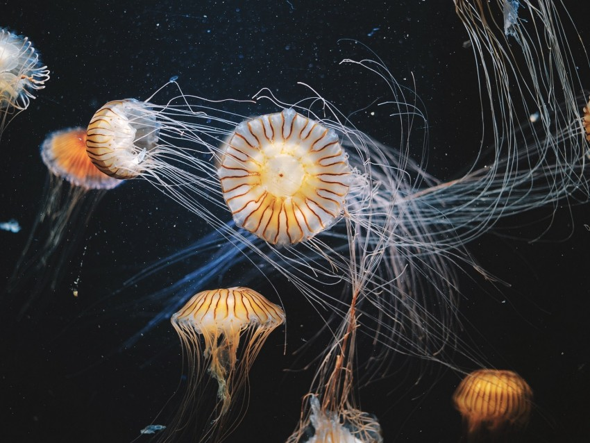 free PNG jellyfish, underwater world, swimming, tentacles, striped background PNG images transparent