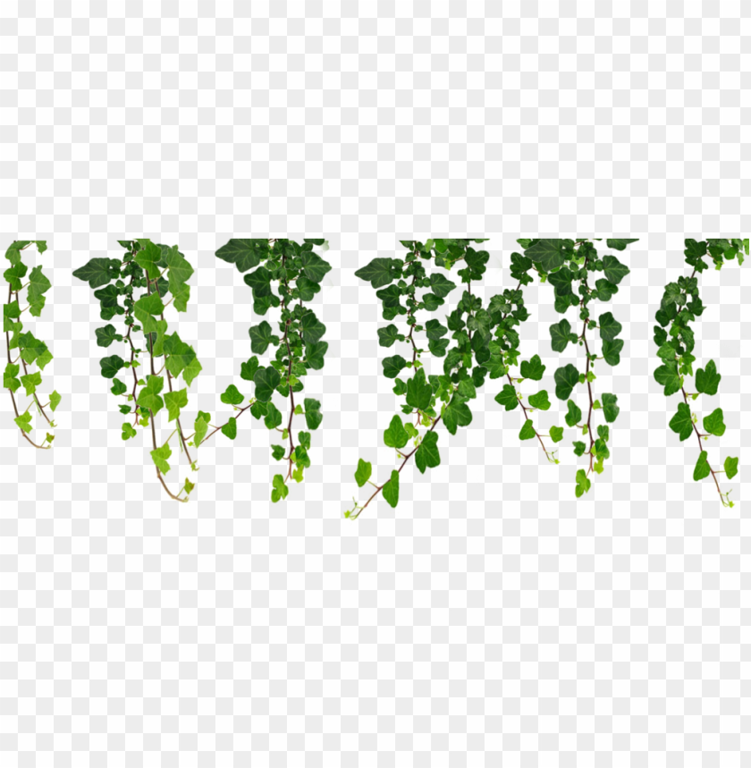 free PNG jpg royalty free download hanging vines png by moonglowlilly - hanging vines clip art PNG image with transparent background PNG images transparent