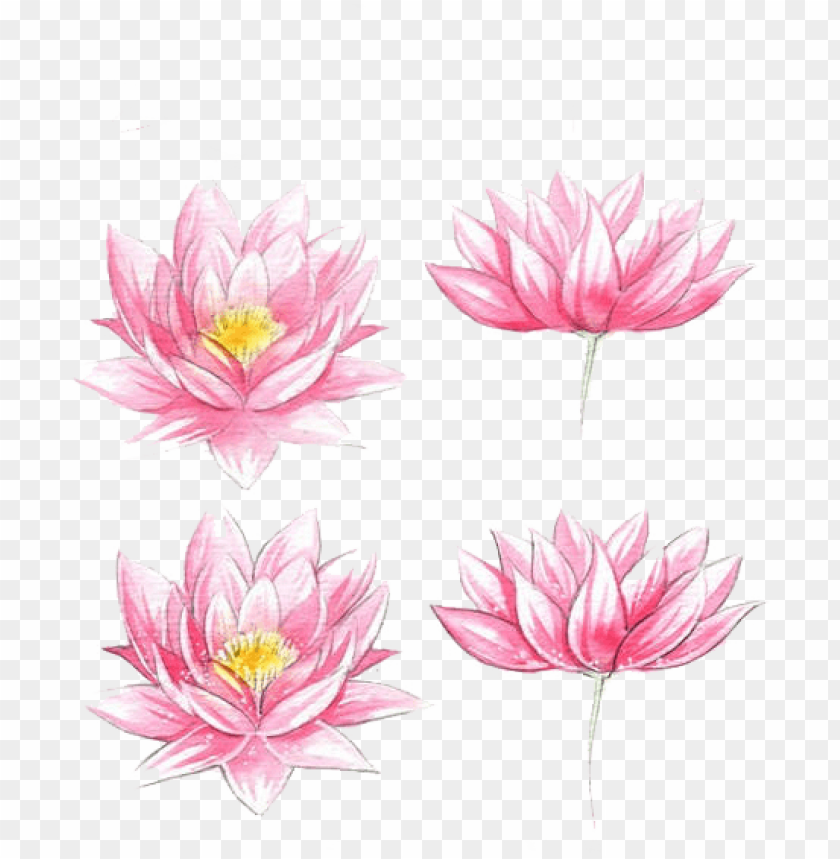 free PNG jpg transparent stock flowers watercolor painting lotus - watercolor flowers easy draw PNG image with transparent background PNG images transparent