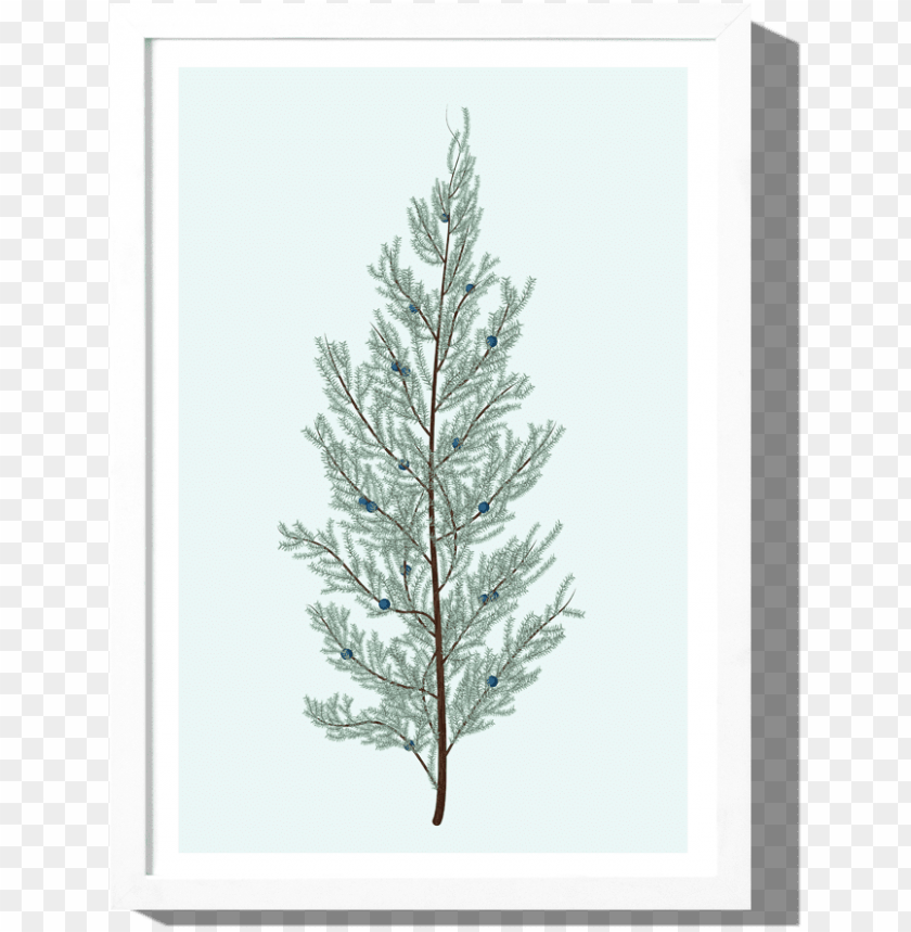 free PNG juniper art print roo kee roo - christmas tree PNG image with transparent background PNG images transparent