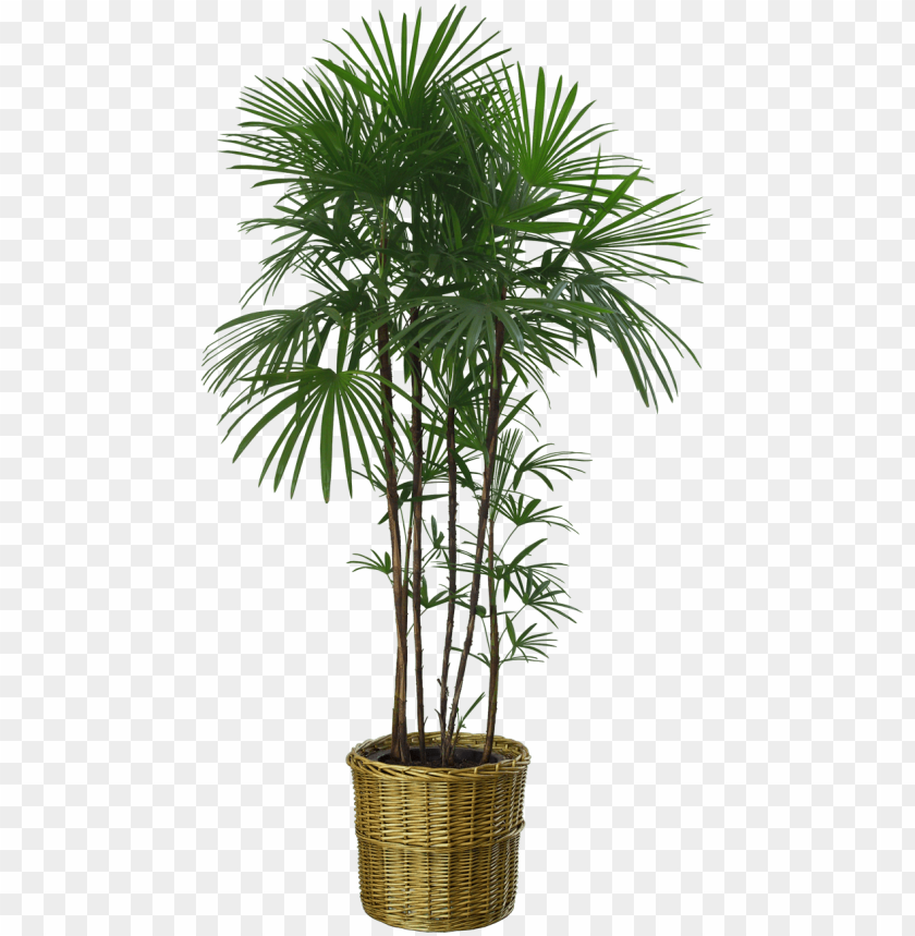 free PNG just copy these plants and you can adjust them in any - plant png no background PNG image with transparent background PNG images transparent