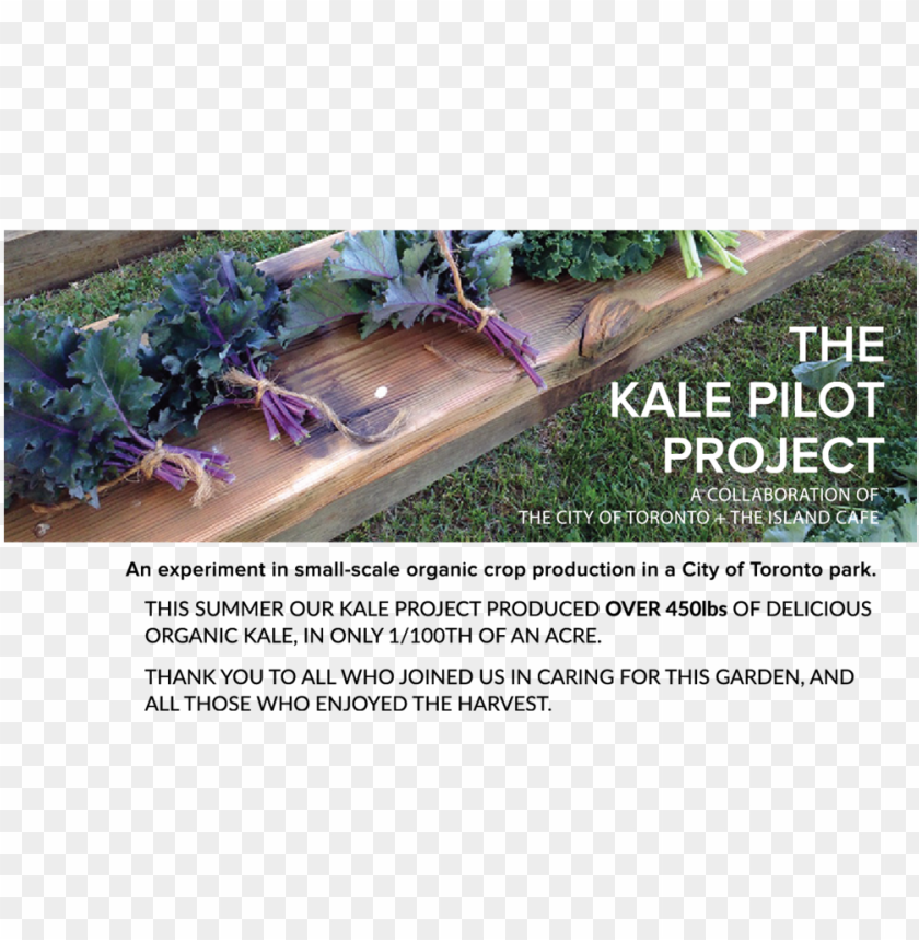 free PNG kale project fall PNG image with transparent background PNG images transparent
