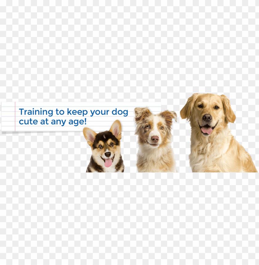 free PNG keep it cute dog training alexandria, arlington, mclean, - pembroke welsh corgi notebook & journal. productivity PNG image with transparent background PNG images transparent