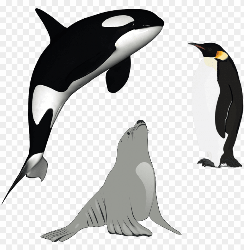free PNG killer whale download png - killer whale PNG image with transparent background PNG images transparent