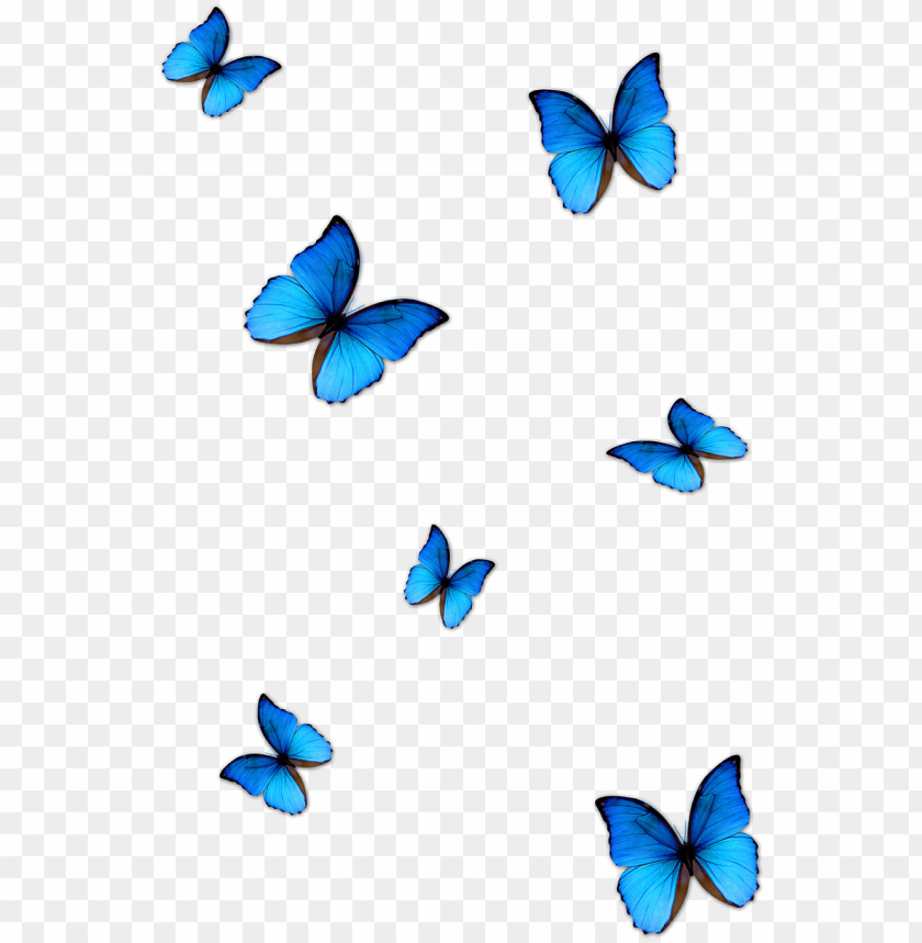 free PNG kisspng butterfly blue phengaris alcon blue butterfly - butterfly effect photo editi PNG image with transparent background PNG images transparent