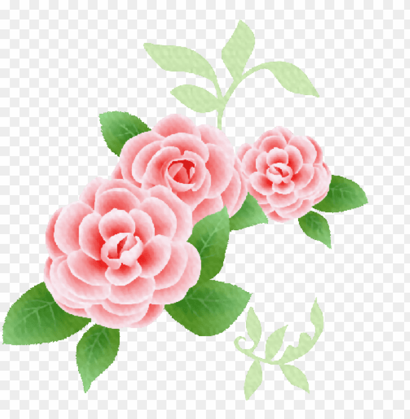Kit De Rosas Y Flores Vintage Para Diseños Png Rosas