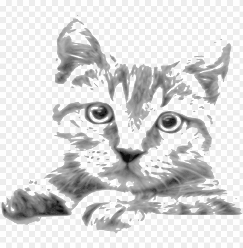 free PNG kitten whiskers tabby cat siamese cat javanese cat - drawi PNG image with transparent background PNG images transparent