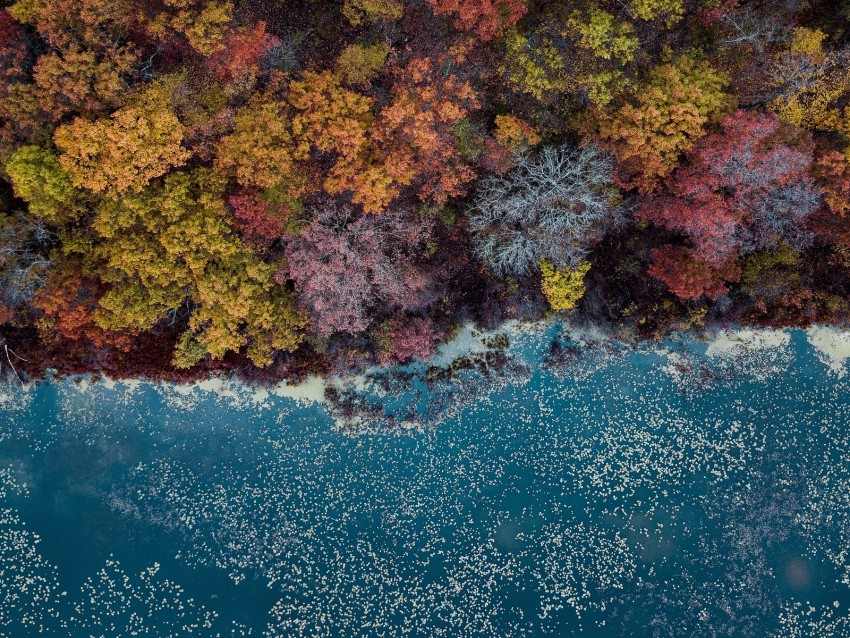 free PNG lake, trees, aerial view, autumn, autumn colors background PNG images transparent
