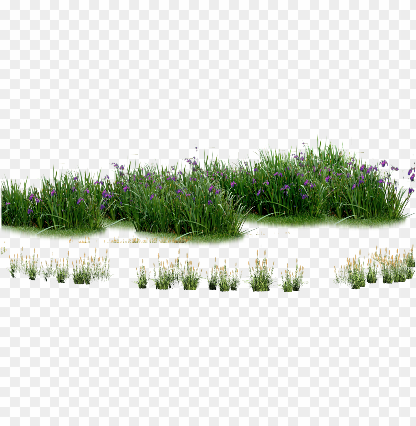 free PNG landscaping computer file plants - plants flowers PNG image with transparent background PNG images transparent
