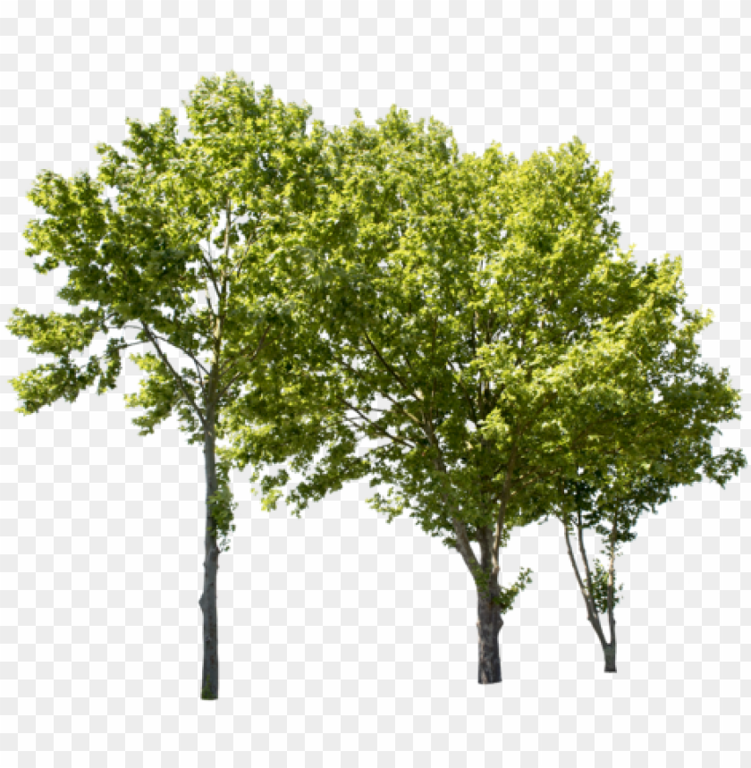 free PNG lane tree group ii - group of trees PNG image with transparent background PNG images transparent