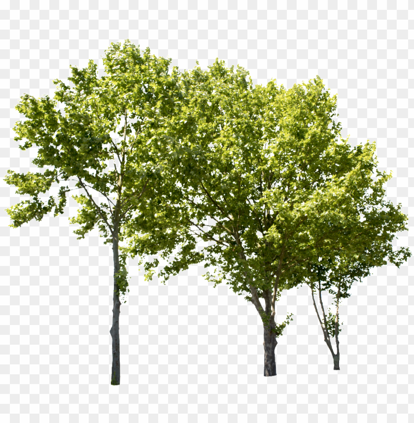 free PNG lane tree group ii - tree groups PNG image with transparent background PNG images transparent