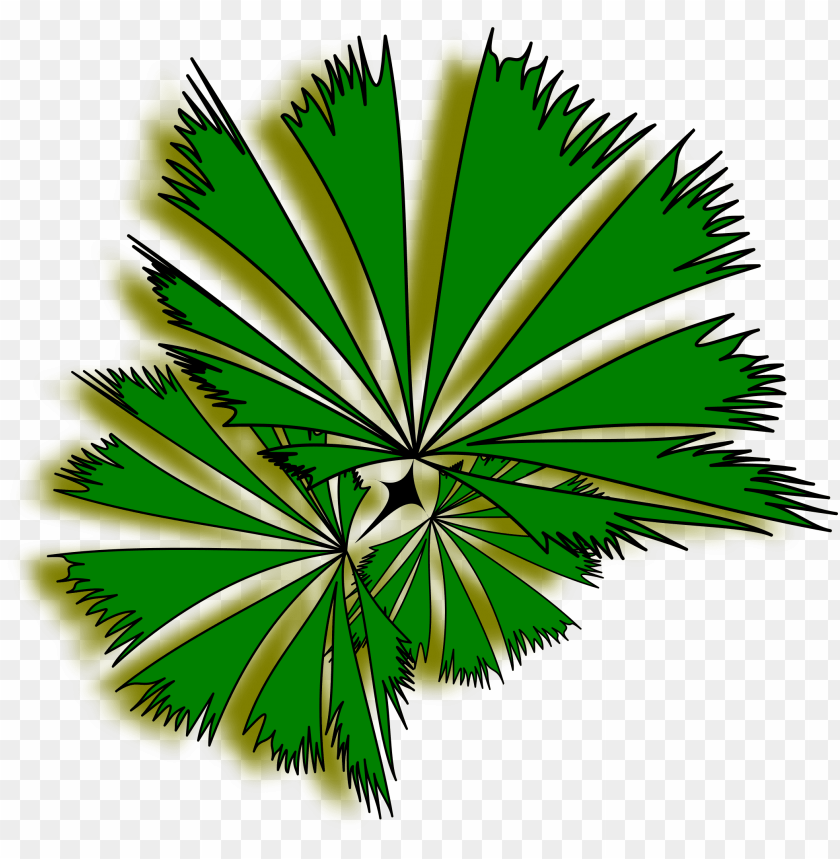 free PNG lant top view png - palm tree top view clipart PNG image with transparent background PNG images transparent