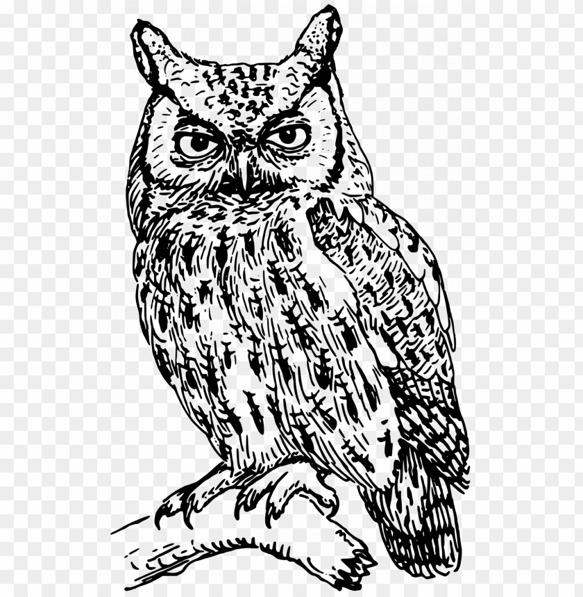 Large Size Of How To Draw A Realistic Owl Step By For Owl Clipart Black And White Png Image With Transparent Background Toppng
