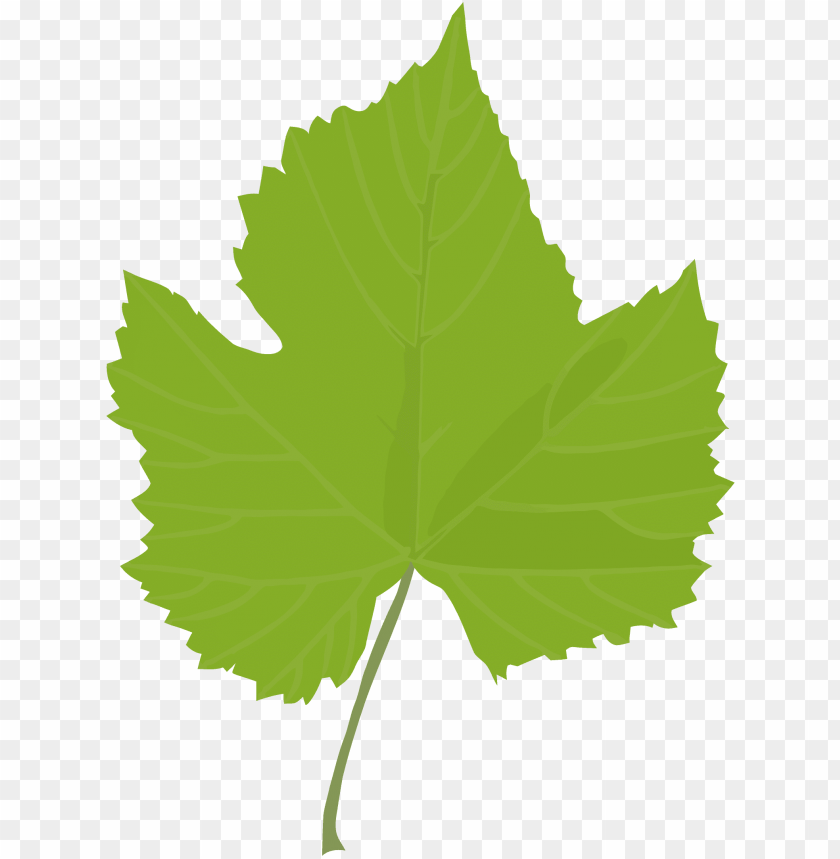 Leaf Common Grape Vine Grape Leaves Plant Stem Plants Grape Leaf Clip Art Png Image With Transparent Background Toppng