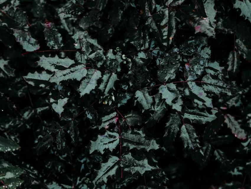 free PNG leaf, drops, plant, moisture, rain, carved background PNG images transparent