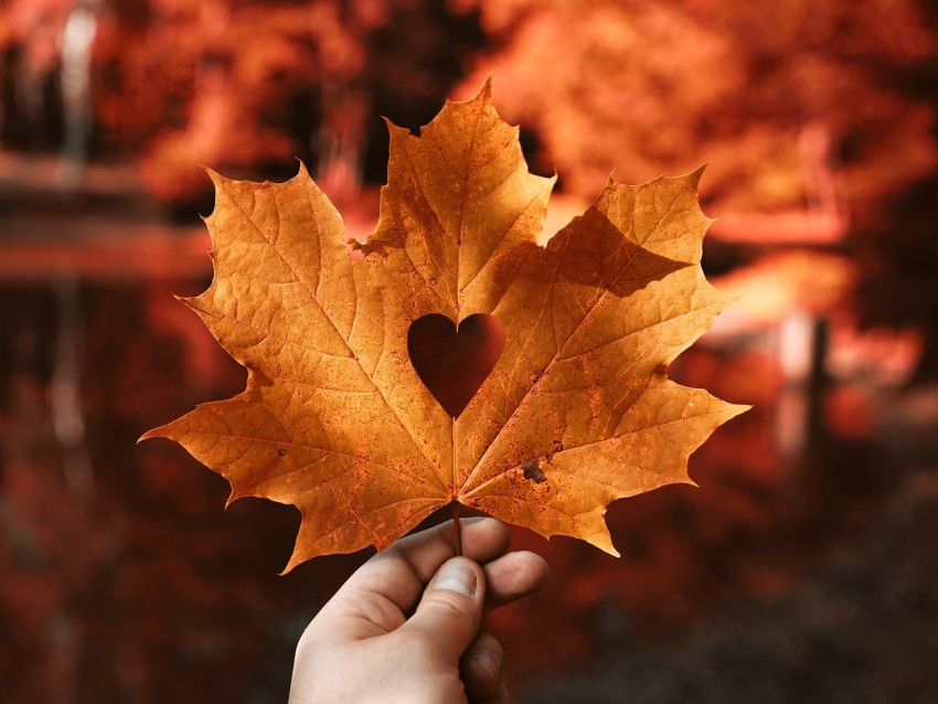 free PNG leaf, maple, autumn, heart, hand, blur background PNG images transparent