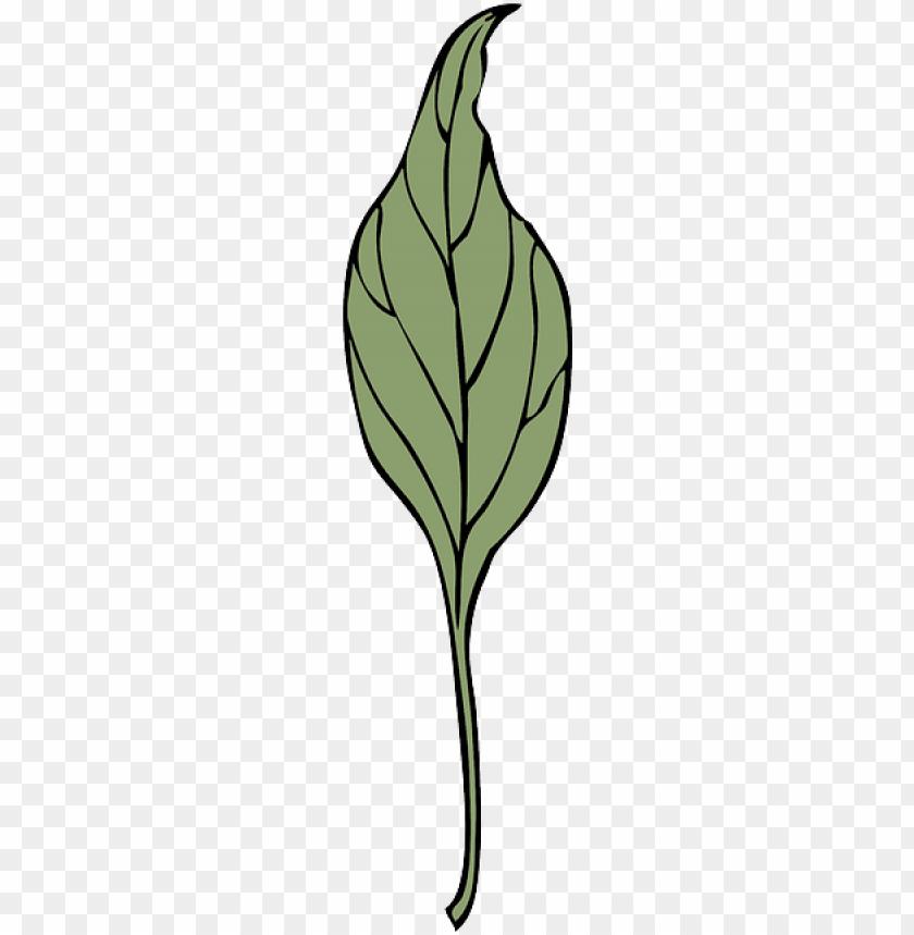 free PNG leaf, plant, vine, ivy, vegetation, herb, drugs - leaf PNG image with transparent background PNG images transparent