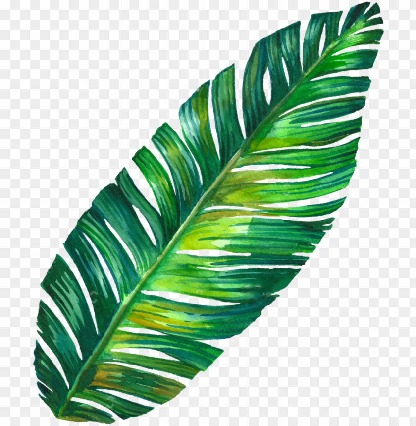 Leaf Png Tumblr Banana Leaf Tumblr Png Image With Transparent Background Toppng 429 x 750 jpeg 120 кб. leaf png tumblr banana leaf tumblr