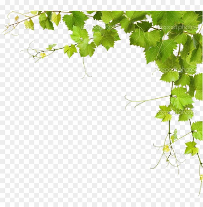 Leaf Vine Png Download Grapes Leaves Png Image With Transparent Background Toppng