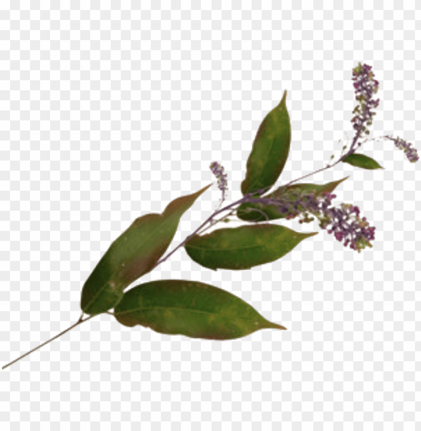 leave leaves flower plant aesthetic vintage green purpl