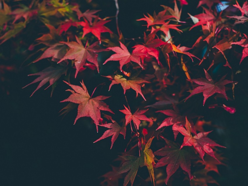 free PNG leaves, autumn, blur, branches, autumn colors background PNG images transparent