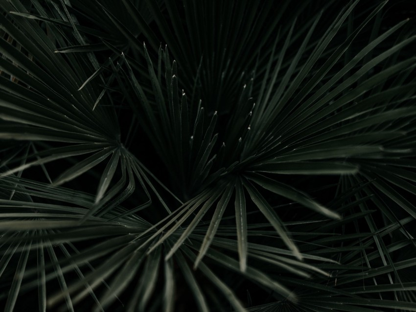free PNG leaves, palm, tropical, branches, dark green, plant background PNG images transparent