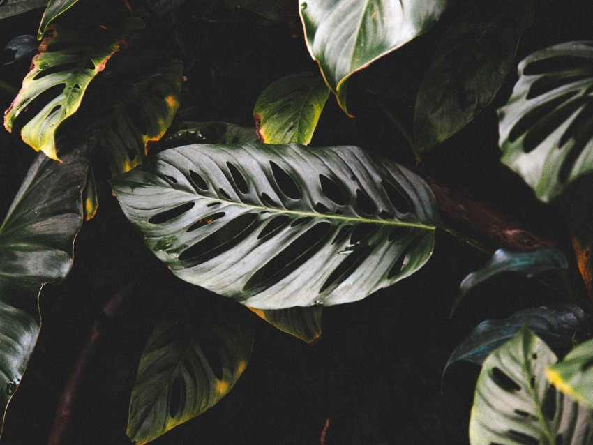 free PNG leaves, plant, dark, glossy, tropical, exotic background PNG images transparent