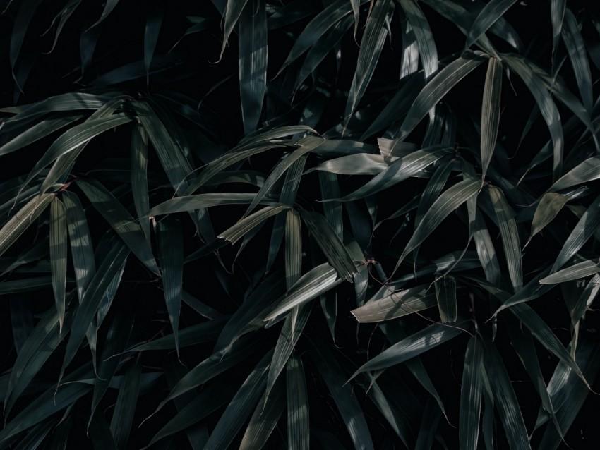 free PNG leaves, plant, dark, shadows background PNG images transparent