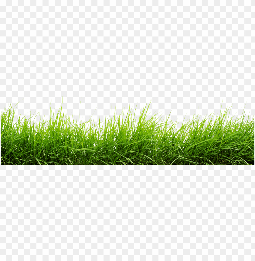 free PNG line of grass png image - grass png images hd PNG image with transparent background PNG images transparent