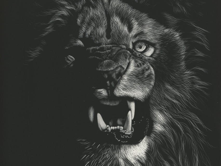 free PNG lion, grin, art, bw, drawing background PNG images transparent