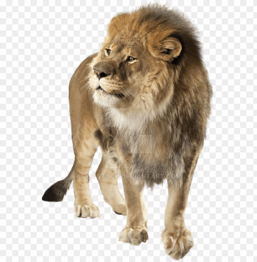 Lion Png Transparent Background Lion Png Image With Transparent Background Toppng