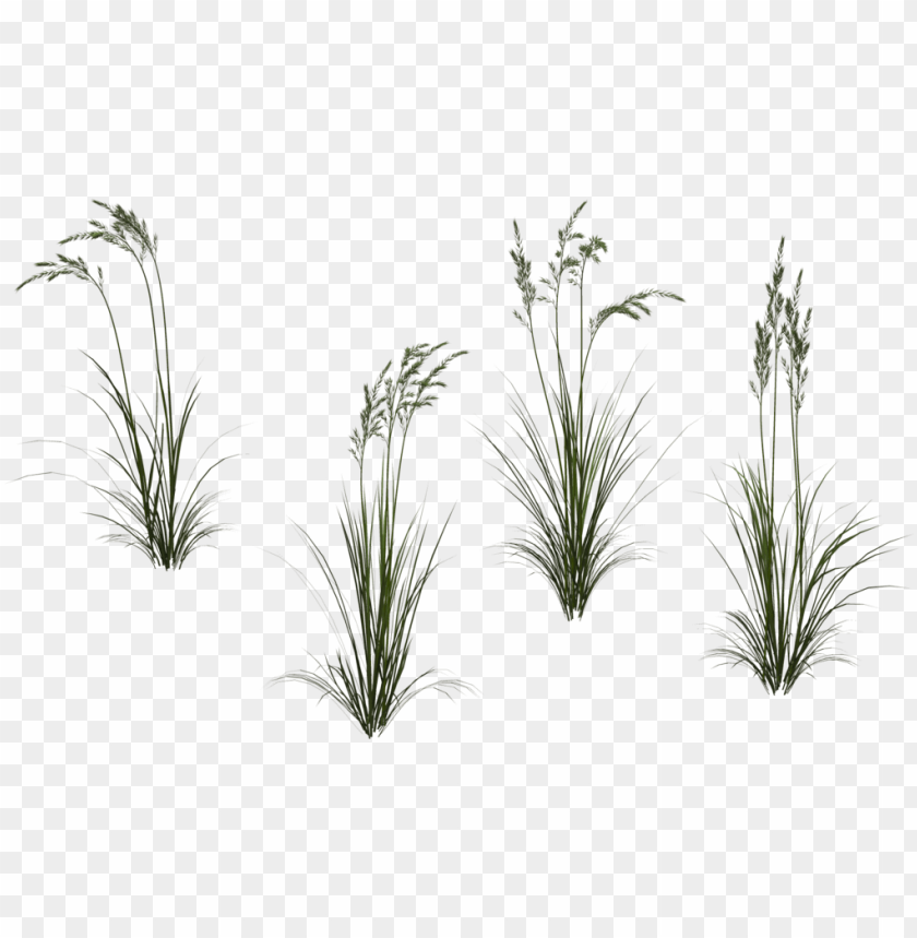 free PNG long grass png high-quality image - long flower transparent PNG image with transparent background PNG images transparent