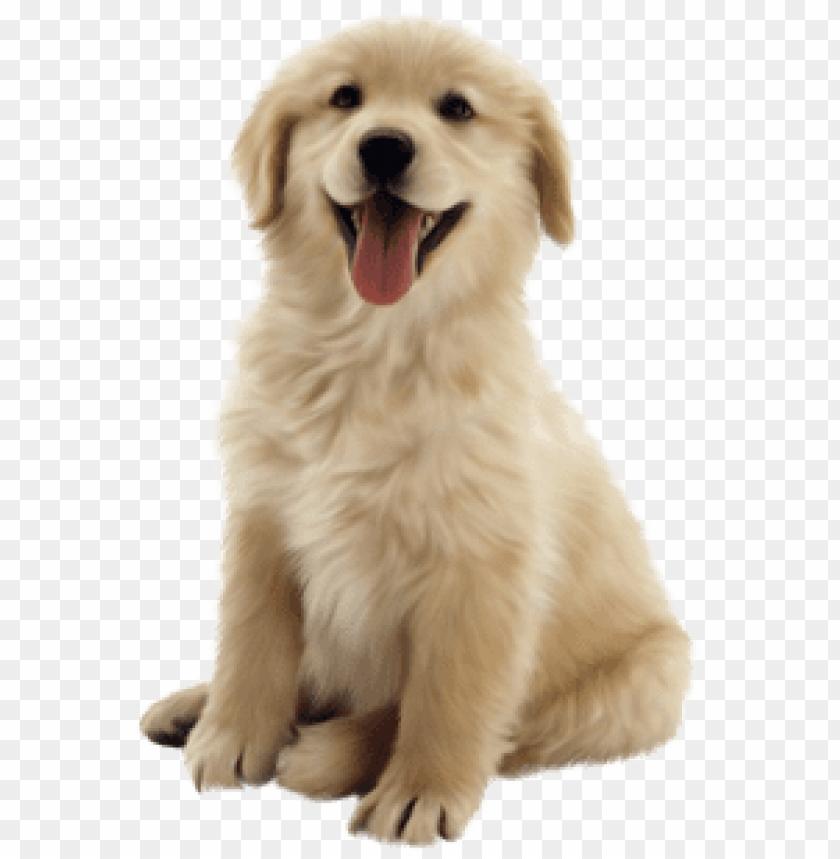 free PNG los mejores planes de salud para tu perro - hertzko long blade dog & cat dematting comb PNG image with transparent background PNG images transparent