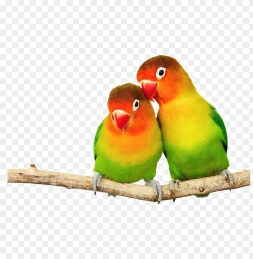free PNG love birds png transparent image - love birds PNG image with transparent background PNG images transparent