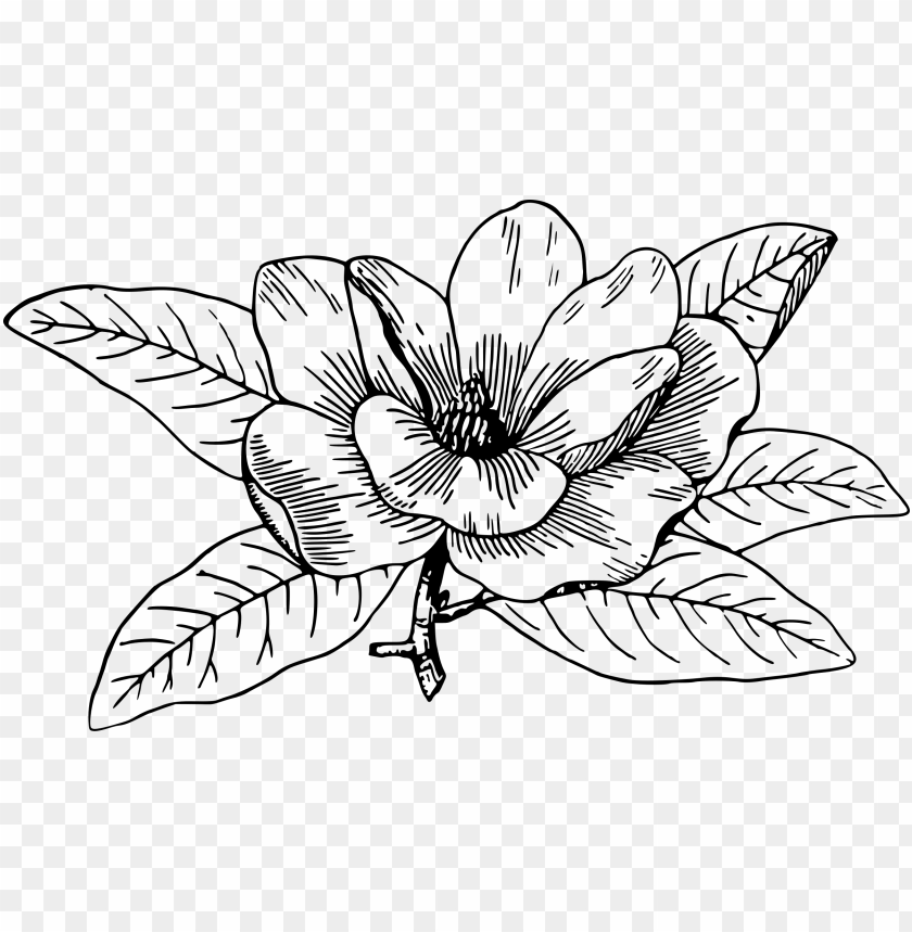 free PNG magnolia icons png - black and white magnolia clipart PNG image with transparent background PNG images transparent