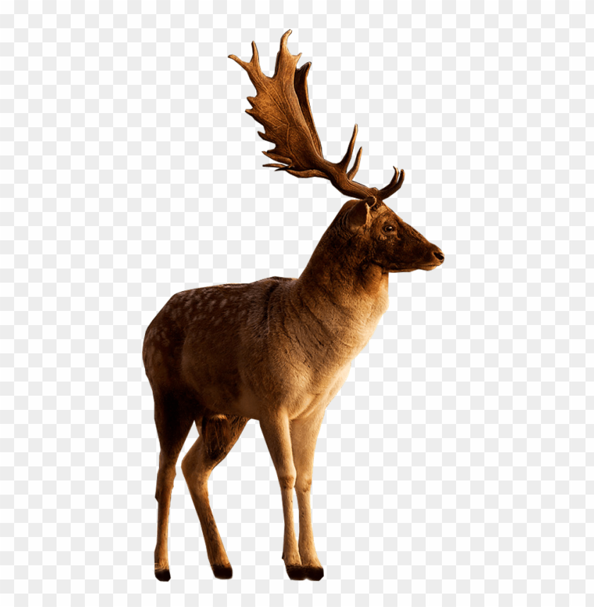 free PNG Download male deer looking to side png images background PNG images transparent