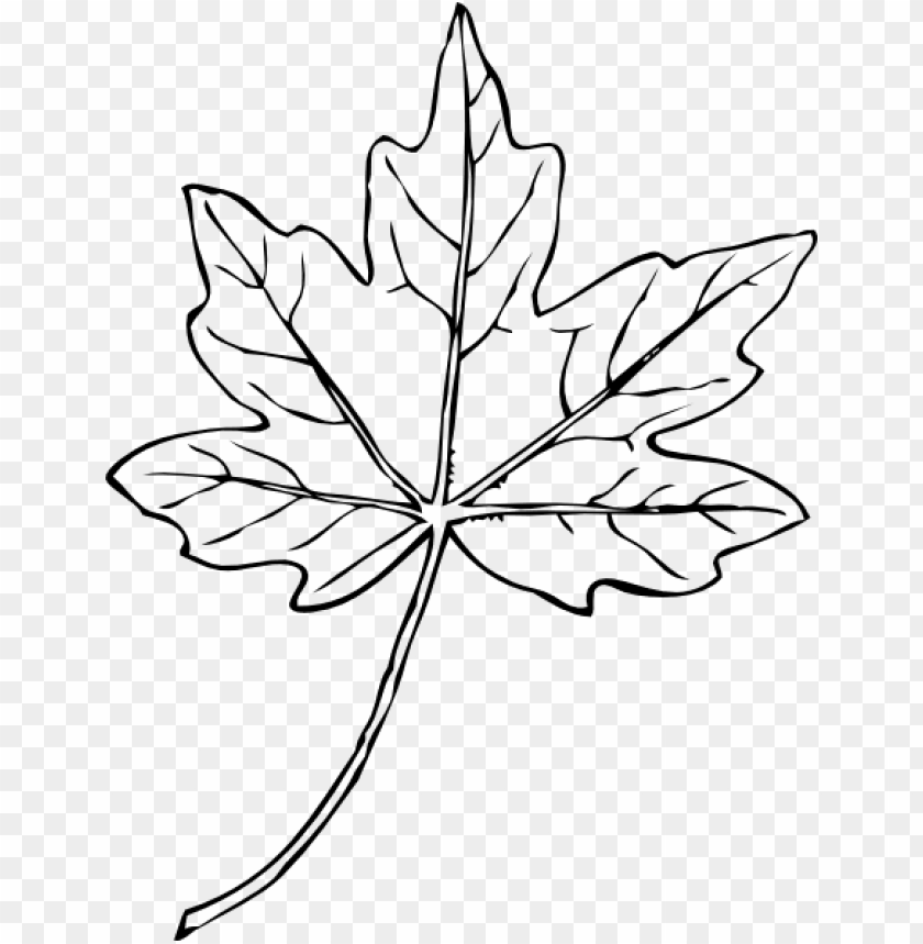 free PNG maple leaf clip art at clker - white maple leaf clipart PNG image with transparent background PNG images transparent