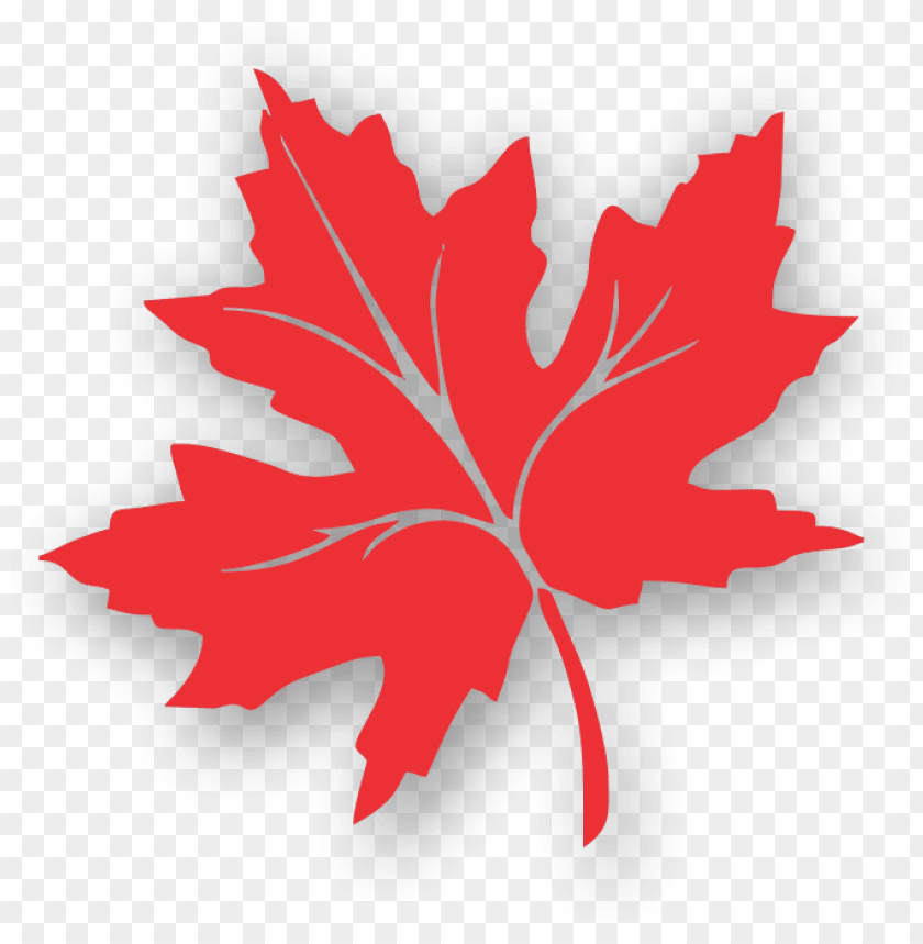 free PNG maple leaf clipart kashmir - red leaf of chinar PNG image with transparent background PNG images transparent
