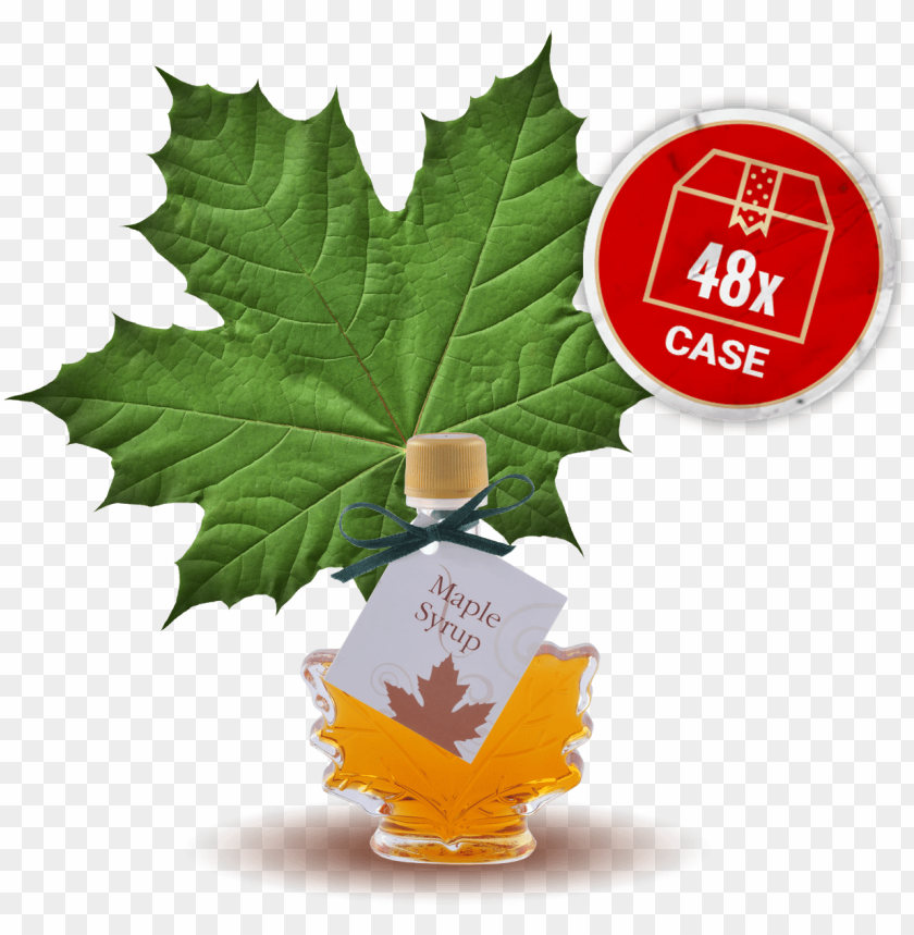 free PNG maple syrup, small maple leaf bottle, 48 x bottles - green maple leaf PNG image with transparent background PNG images transparent