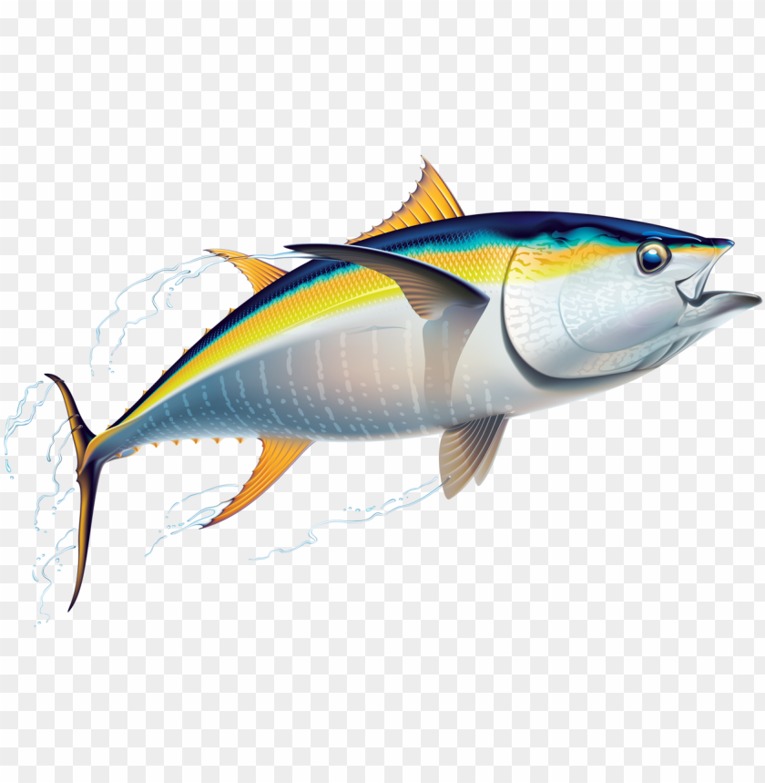 Marine Fish Clipart Australian Fish Tuna Clip Art Png Image With Transparent Background Toppng