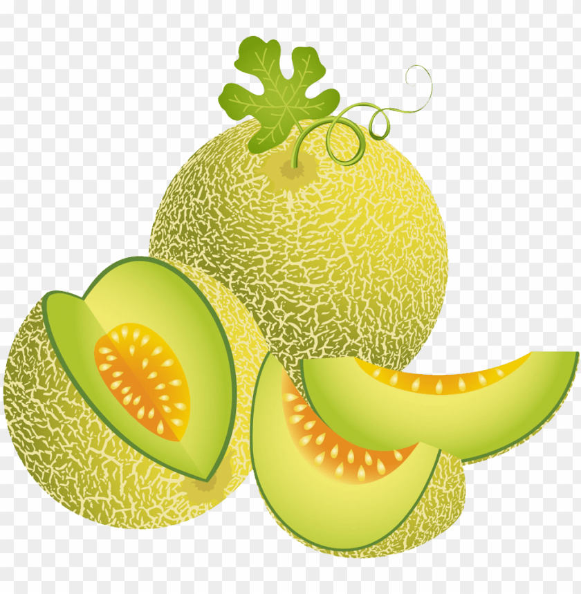 free PNG melon illustration green transprent png free download - melon vector PNG image with transparent background PNG images transparent