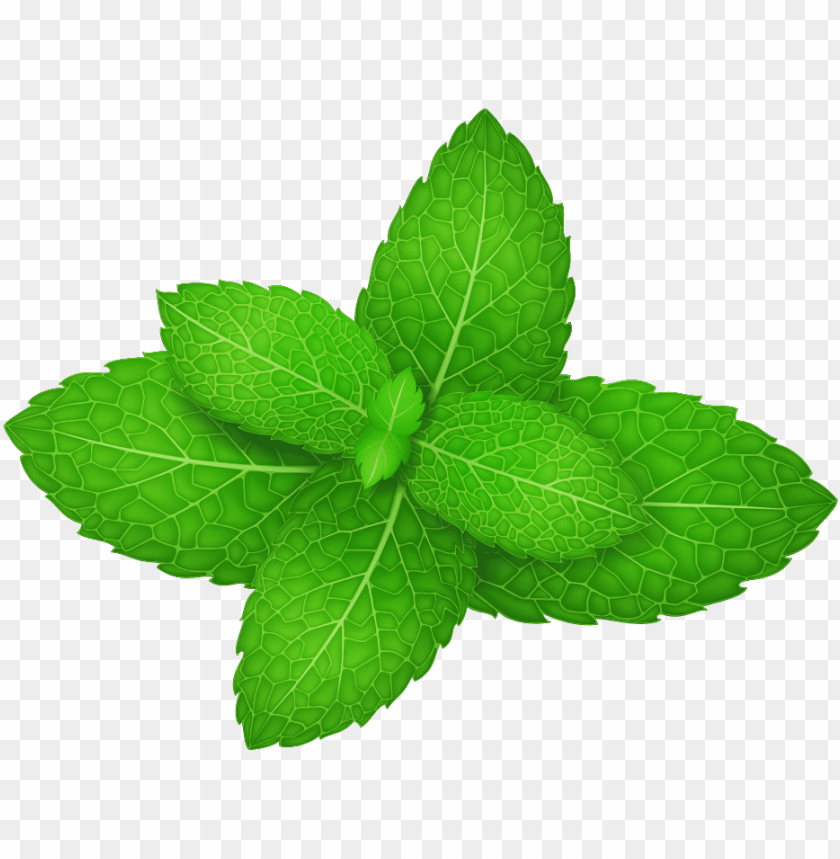 free PNG mentha spicata peppermint herb leaf - mint leaf vector PNG image with transparent background PNG images transparent