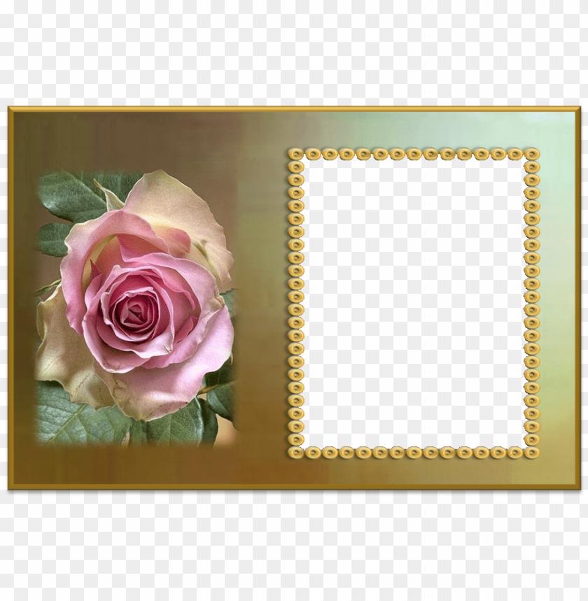 free PNG molduras para fotos com flores trabalho de terezinha - molduras para fotos e flores PNG image with transparent background PNG images transparent