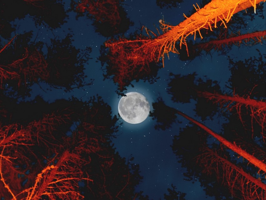 free PNG moon, full moon, bottom view, trees, light background PNG images transparent
