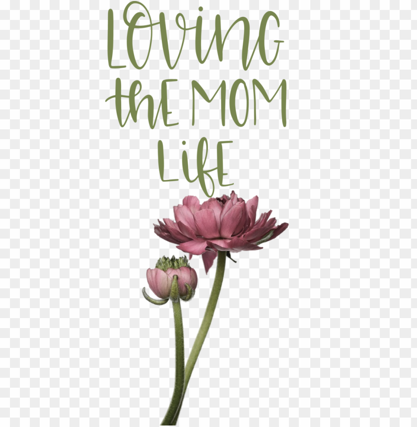 free PNG Mother's Day Mother's Day Father's Day Flower for Love You Mom for Mothers Day PNG image with transparent background PNG images transparent